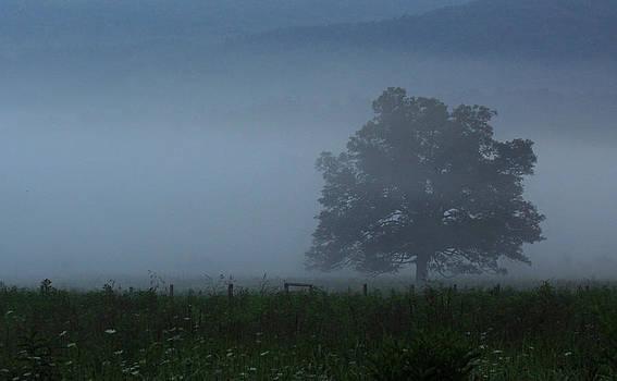 Solitude by Steve Hucks
