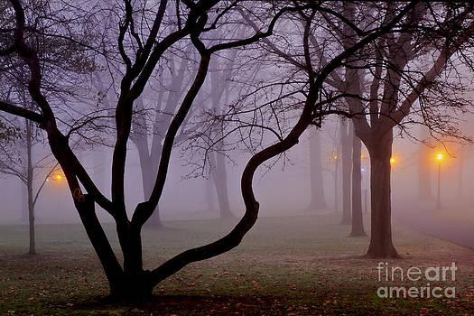 Brenda Giasson - Solitudes Glow