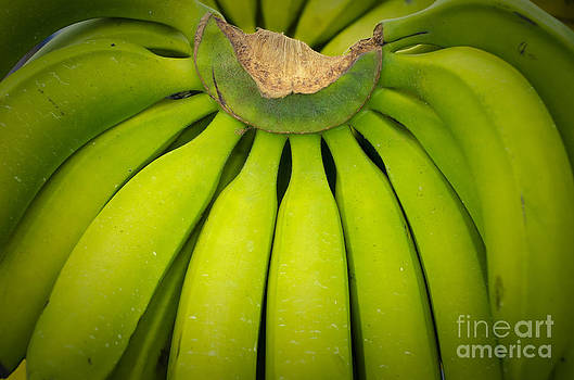 Some Fresh Green Bananas On A Street Fair In Brazil by Ricardo Lisboa