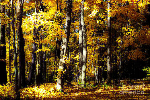 Rachel Barrett - Somewhere in the Forest