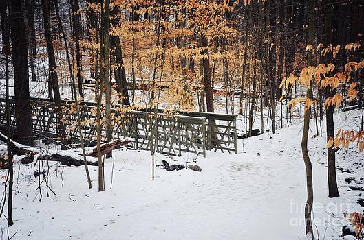 Rachel Barrett - Somewhere in the Woods