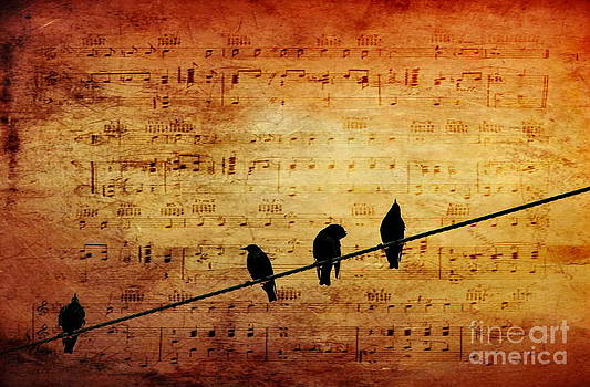 Song Birds by Andrea Kollo