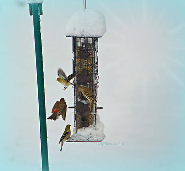 Song Birds by Sheila Noren