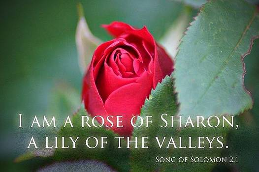 Song Of Solomon by Thomas Fouch