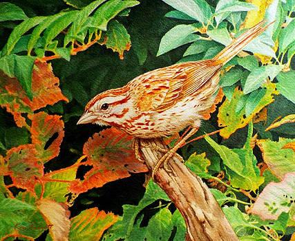 Song Sparrow  by Ken Everett