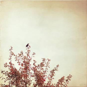 Carolyn Cochrane - Songbird