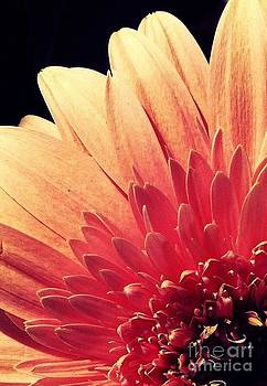Sonnenblume by Waverley Manson