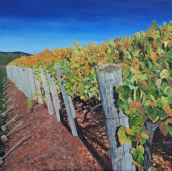 Sonoma Vineyard 2 by Steven Fleit