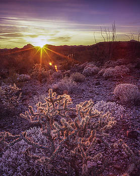 Sonoran Delight by Tony Santo