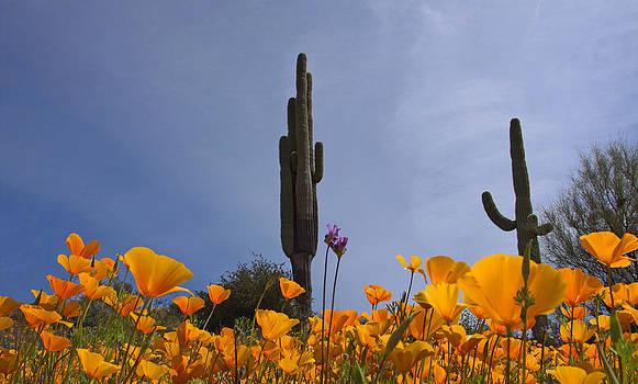 Susan Rovira - Sonoran Spring