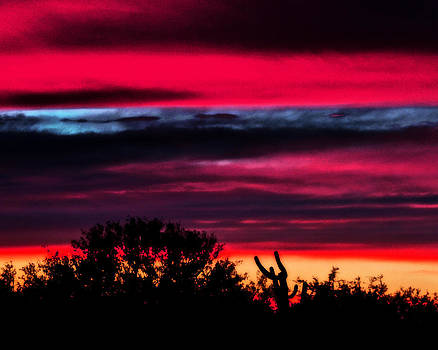 Sonoran Sunset Tucson Desert by Jon Van Gilder