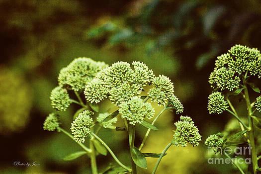 Soothing Green  by Jinx Farmer