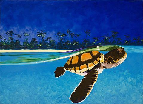 South Padre Sea Turtle by Anguspaul Reynolds