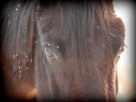 Soul Horse by Kasie Morgan