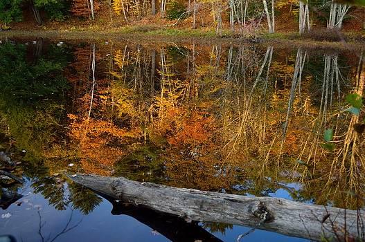 Soulful Reflection by Glenn Sanborn
