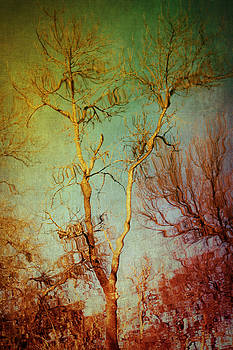 Souls of Trees by Trish Mistric