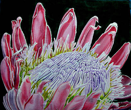 South African Flower Protea Painting by Sylvie Heasman
