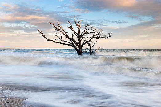 South Carolina Low Country Tree in Surf by Mark VanDyke