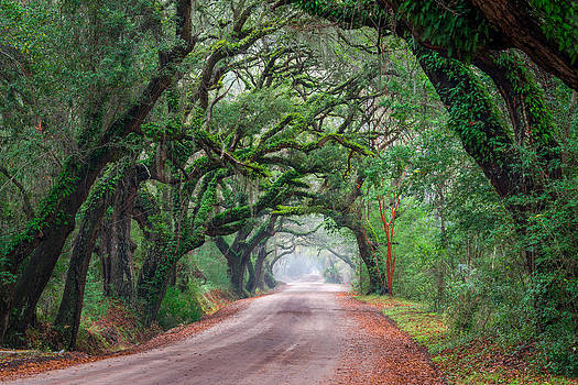 South Carolina Road by Mike  Walker