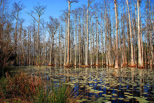 Susanne Van Hulst - South Carolina Swamps