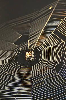 South Carolina Web by Peter  McIntosh