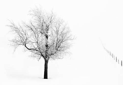 South Dakota Winter by David Wynia