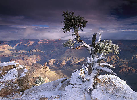 Tim Fitzharris - South Rim Of Grand Canyon