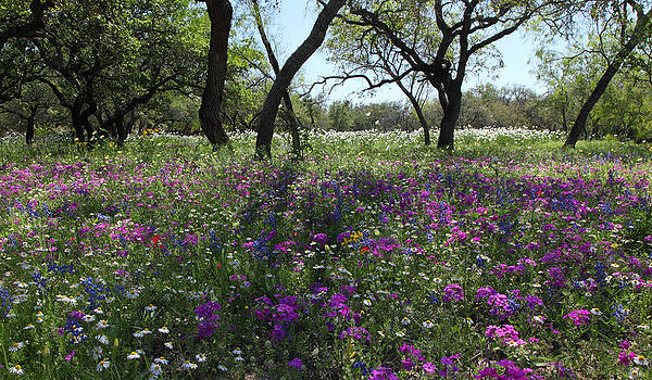 Susan Rovira - South Texas Meadow