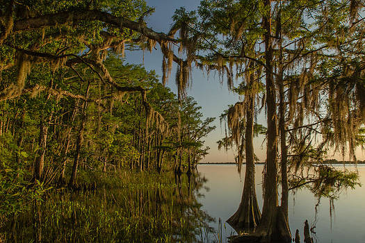 Southern Beauty  by Julie Andel