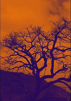Joe Bledsoe - Southern California Sky