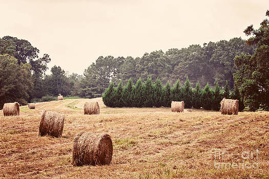 Southern Living by Jinx Farmer