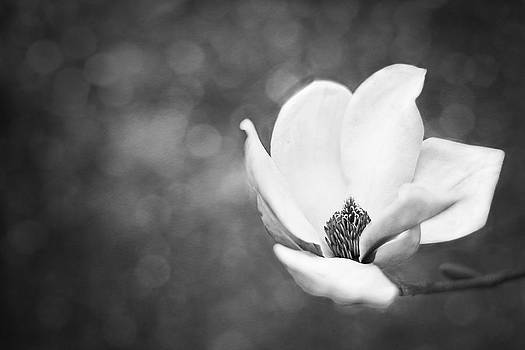 Southern Magnolia Bloom by Jessie Gould