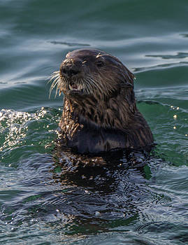 Randy Straka - Southern Sea Otter 2