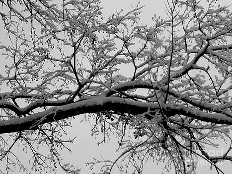 Southern Snowfall by Diane Miller