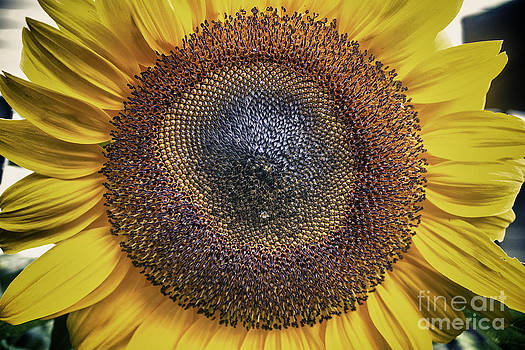 Cris Hayes - Southern Sun