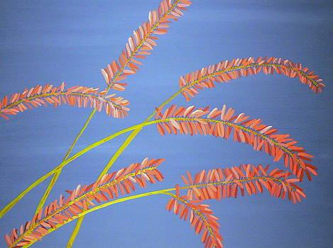 Karyn Robinson - Southwest Contemporary Art - Red Aloe