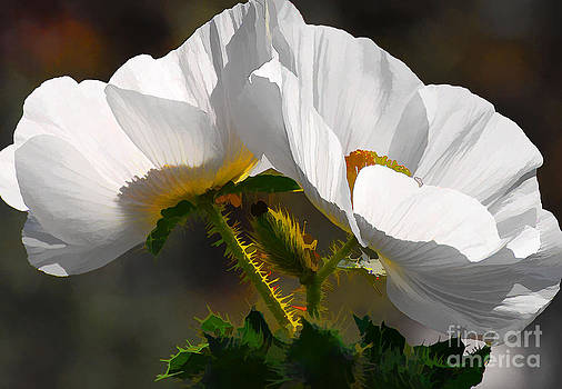 Southwestern Prickly Poppy by Betsy Aguirre