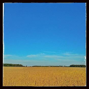 Soybean Harvest Time #hoosierskies by Sandy MacGowan