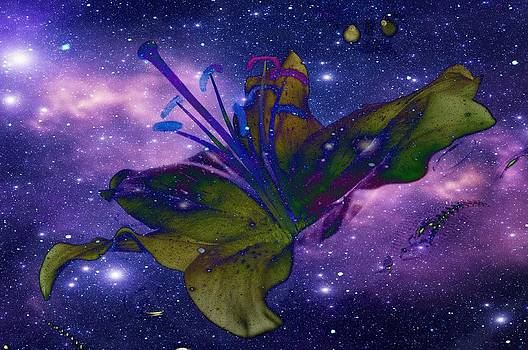 Space flower by Heather L Wright
