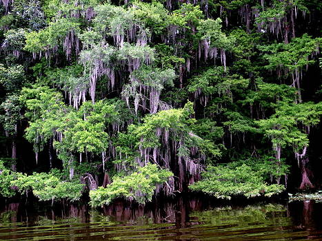 Spanish Moss by David  Brown