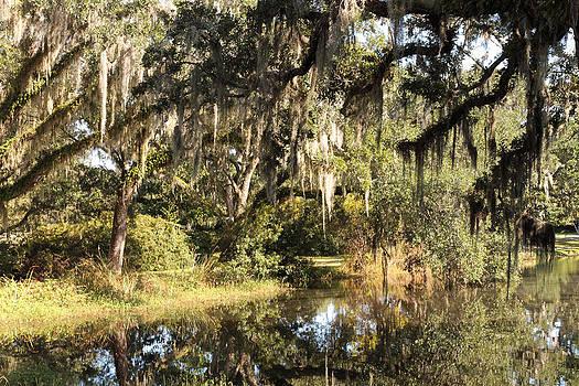 Spanish Moss Pond by Dulce Levitz
