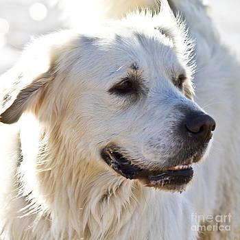 Heiko Koehrer-Wagner - Spanish White Dog