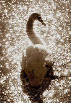 Sparkling Swan by Dale Hall