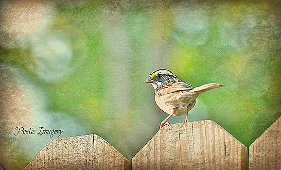 Sparrow by Debbie Sikes