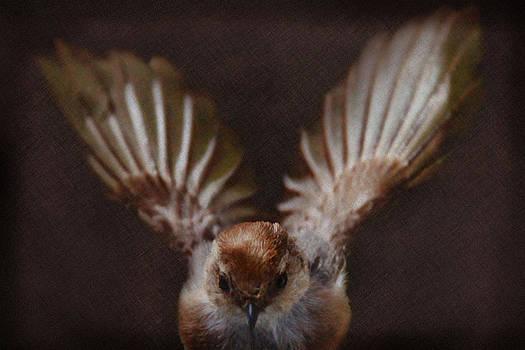 Sparrow in Flight by Sally Bauer