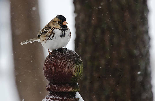 Sparrow in the Snow by Lisa Moore