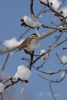 Sparrow by Karen Harper