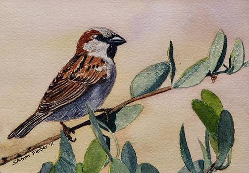 Sparrow by Sharon Farber