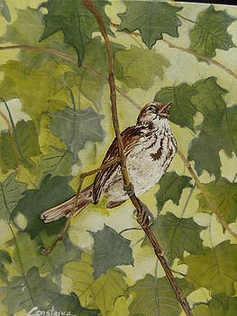 Sparrow's Call by Connie Rowsell