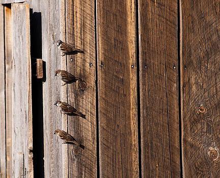 Eric Rundle - Sparrows Four
